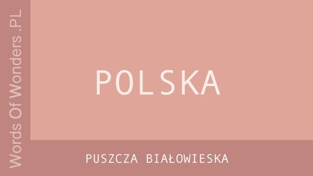 wow Puszcza Białowieska